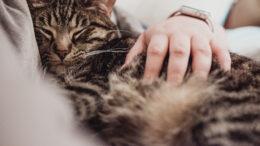 Cómo se cura sarna en gatos