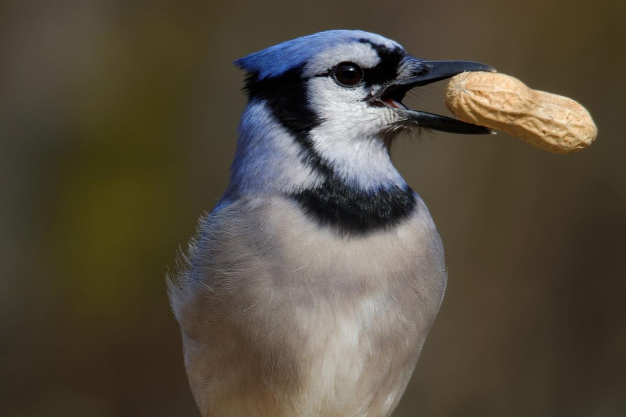 Pájaros que comen semilla