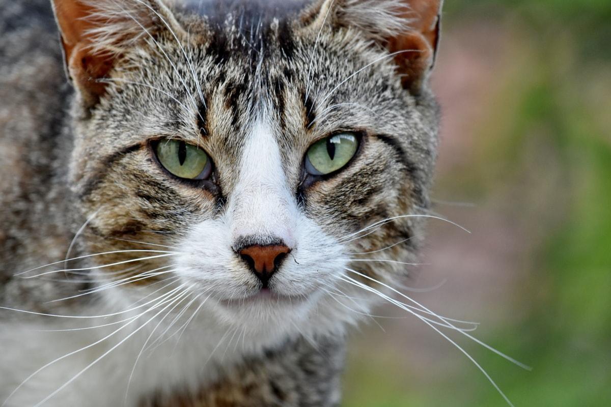 Años de vida de un gato