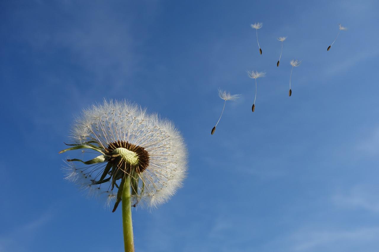 Función de los vientos