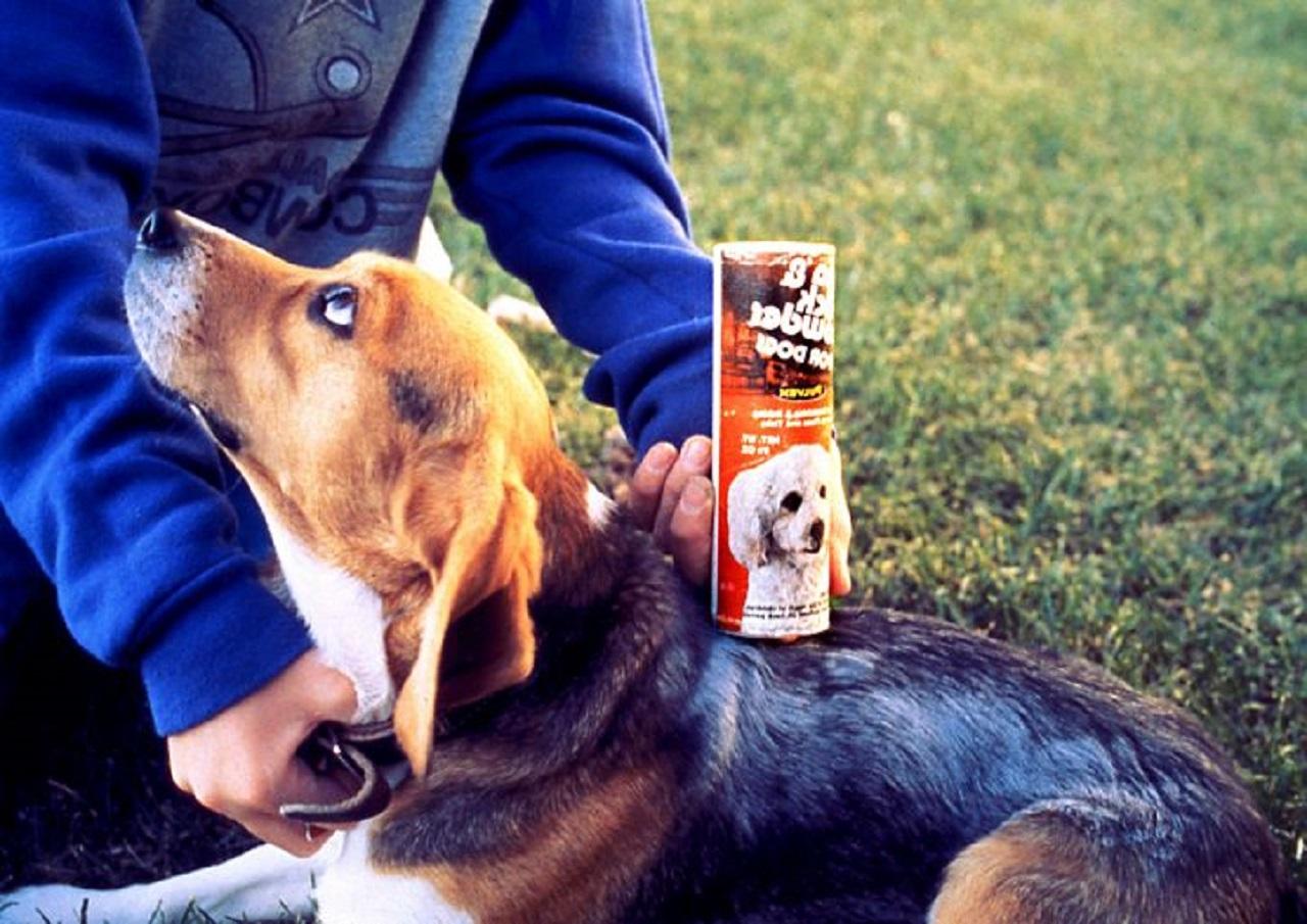Quitarle las pulgas a un perro
