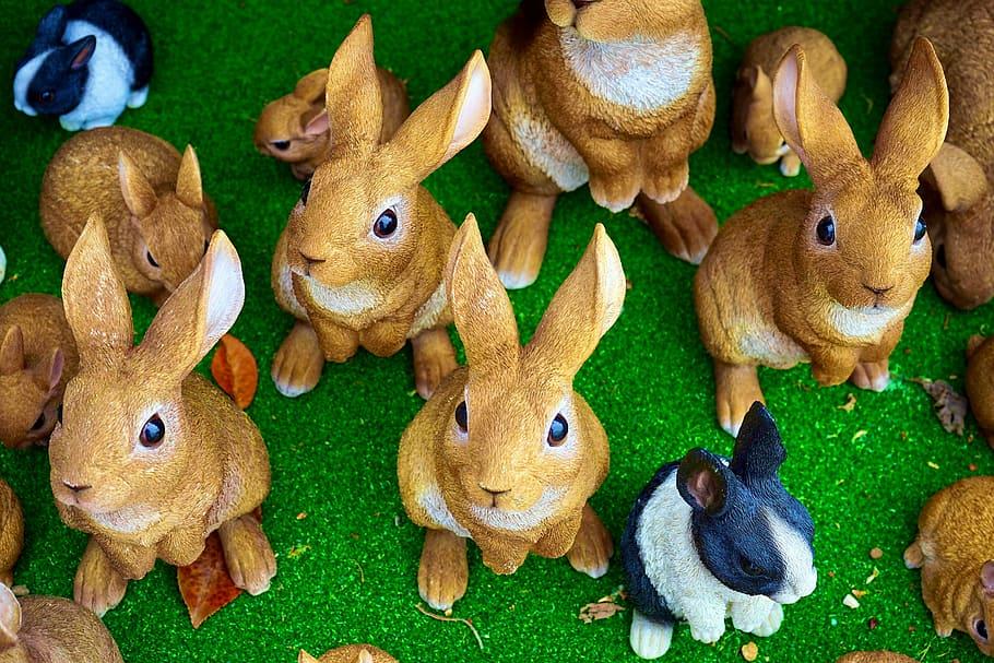 cuantas crias llega a tener un conejo