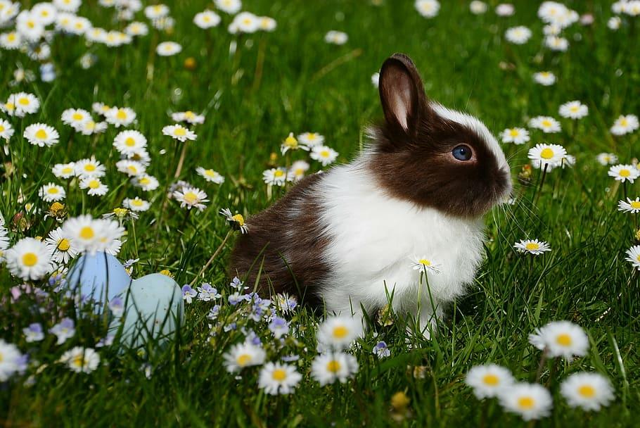 cuantos colores hay de conejos